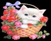 FlowersKittenWhiteBasket