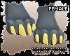 . jinx 2.0 | paws