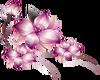 Flowers  Lavender L