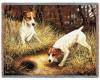 Jack russel terrier<3