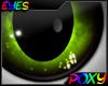 Poxy's Eye 2015