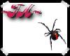 ~FA~ REDBACK SPIDER