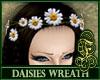 Daisies Wreath White