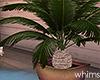 Secret Palm