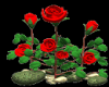 rose in the wind