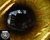 }T{ Golden eyes Male