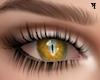 ʞ Eyes Yellow cat