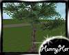 Big Outside Tree V1