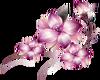 Flowers  LavenderR
