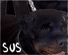 mi doggy