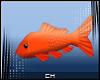 [CH] Zan'D Fish