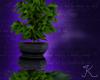 Potted Green Leaf R