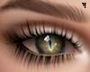 ʞ Eyes Green cat