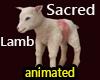 Sacred lamb animated