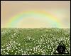 |K Dandelions Field