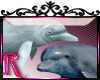 *R* Dolphins Enhancer