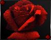 f Red Rose v1