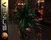 ~V~Indoor Plant 2