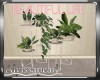 Beautiful Life Plants