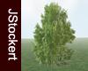 JS Tree #02