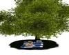 LL TreeHouse Pinic  Tree