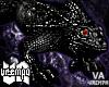 va. head iguana F !