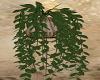 Dreamy / Plant 2