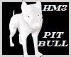 Pit Bull Pet
