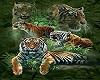 Tiger 1)