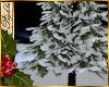I~Moonlit Snow Pine Tree