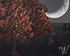 Fall Camping Tree