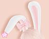 🌟 Bunny Ribbon|P