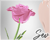 *S Love Rose