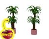 Mo's Plant