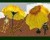 (Sn)SunflowerSeat