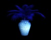 MidNite Blue Plant