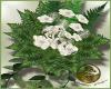 LS~Canceria Bouquet 3