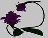 Purple sitting rose