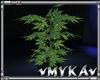VM PLANT
