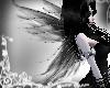 Black Wisp Wings