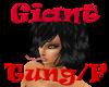 (1M) Giant Tung Female