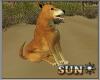 !SR! Animated  dog
