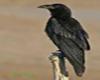 Raven Totem Block