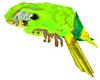Parrot Green anim.