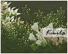 |K Cute Flowers
