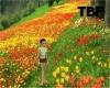 !Tulip Path