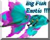 Big Fish Exotic