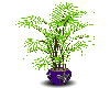 Lime Green Willow Plant