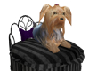 !T! Pets | Yorkie Bed