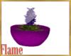plant,decoration